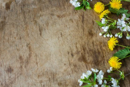 wooden insert: Gentle colored Spring flowers. Wooden board rustic. Spring background. Insert text