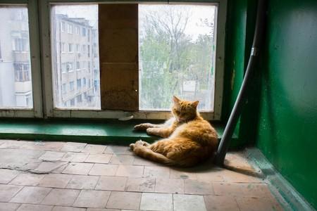 entryway: big red cat sleeping on the floor in the entryway