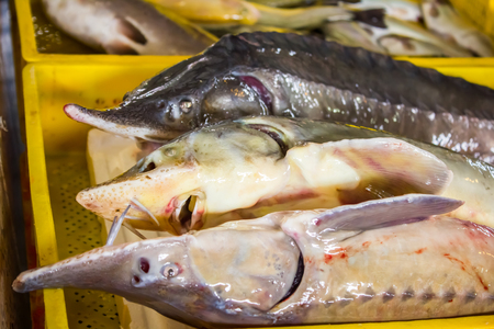 silver perch: a lot of different fish on the shelves at the fish market Stock Photo