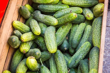 Many green cucumbers in a box at a vegetable market