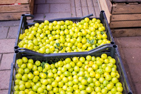 A lot of ripe juicy green apples on the counter of the vegetable market