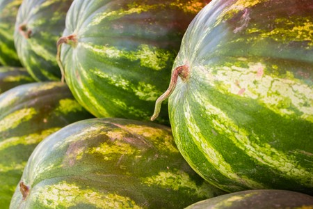 large ripe melons on the market close up view