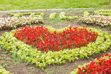 original flower beds with lots of different colors in the shape of a heart