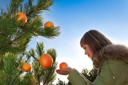 naranjas: Pino m�gica; Naranjas crecen en pino Foto de archivo
