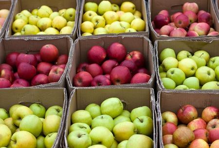 Viele farbige Äpfel in Kisten