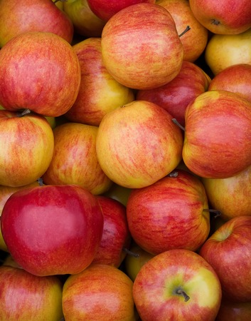 fruit trade: Colored fresh juicy apples closeup shot Stock Photo