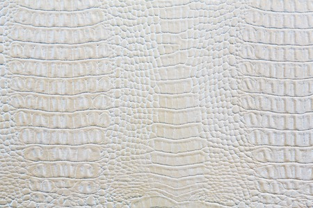 Crocodile skin white leather texture background