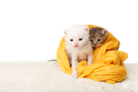 cute kittens: White and grey kittens. Cute kittens in a yellow cotton textile isolated at white background.