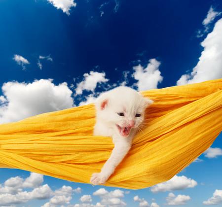 heartwarming: White kitten in a yellow hammock. Cute white kitten in a hammock having rest, at blue sky. Adorable pet. Small heartwarming kitten. Little cat. Animal isolated. High key