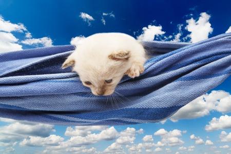 heartwarming: White kitten in a hammock. Cute white kitten in a blue hammock having rest, look down, curious at blue sky background. Adorable pet. Small heartwarming kitten. Little cat. High key