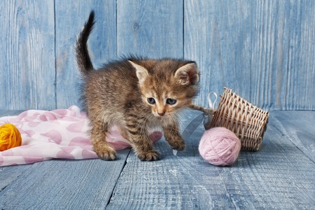wool ball: Grey kitten with pink wool ball and straw basket. Playful grey kitten.