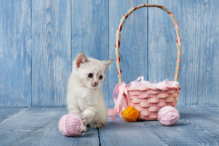 wool ball: White kitten with pink wool ball and straw basket. Playful white kitten. Stock Photo