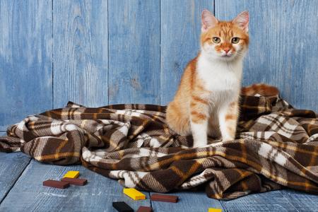 Chat gingembre assis sur une couverture à carreaux sur fond en bois bleu.
