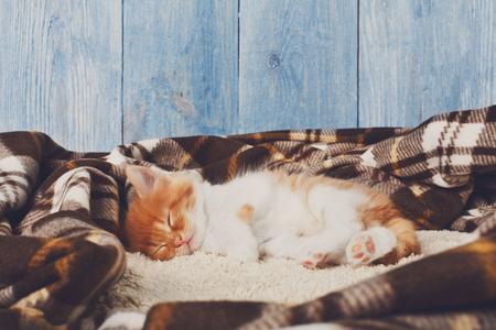 long haired: Long haired red orange kitten sleep at plaid blanket.