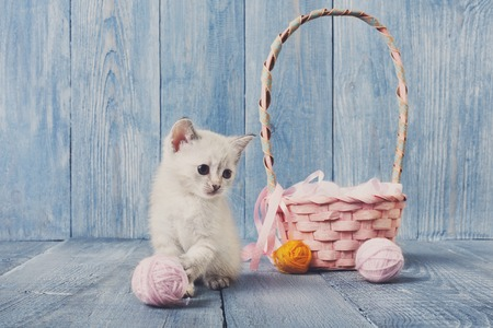 wool ball: White kitten with pink wool ball and straw basket. Stock Photo