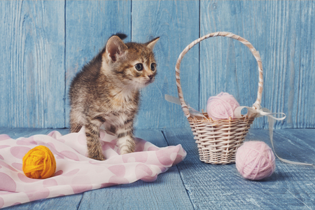 wool ball: Grey kitten with pink wool ball and straw basket. Playful grey kitten. Sweet adorable kitten on a serenity blue wood background. Small cat. Funny kitten with copyspace Stock Photo