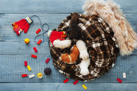 meowing: Kittens and mittens top view, flat lay. White, Red and grey newborn kittens in plaid blanket. Sweet tiny kittens on a serenity blue wood sleeping with mittens. Funny kittens crawling and meowing Stock Photo