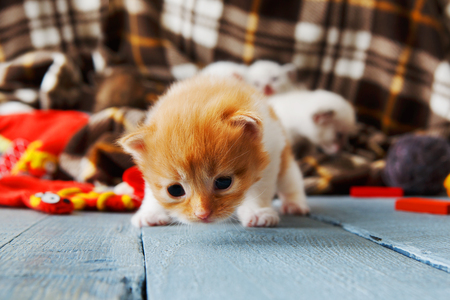 meowing: Kitten and mittens. Ginger orange newborn kitten near a plaid blanket. Sweet adorable tiny kitten on a serenity blue wood background play with mitten. Funny kitten crawling and meowing