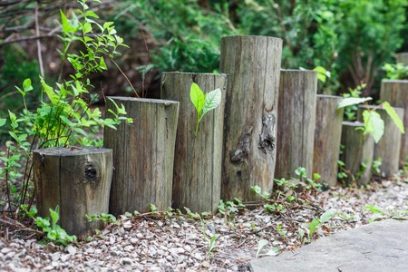 flower garden path: Beautiful landscape design, garden path closeup with wooden log fence from roundwood and evergreen bushes Stock Photo