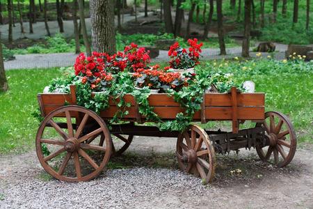 carreta madera: El carro con flores. Scarlet macizo de flores de geranio rojo en estilo retro viejo vagón de madera. El geranio en el diseño del paisaje del parque, el paisajismo moderno