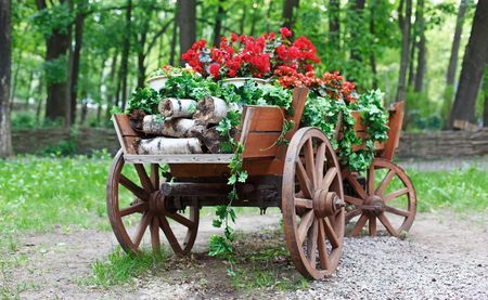 cranesbill: The cart with flowers. Scarlet red geranium flowerbed in retro styled old wooden wagon with birch firewood. Cranesbill in park landscape design, modern landscaping