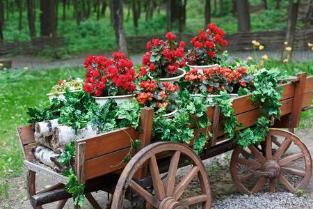 carreta madera: El carro con flores. Scarlet macizo de flores de geranio rojo en estilo retro carro de madera viejo con le�a de abedul. El geranio en el dise�o del paisaje del parque, el paisajismo moderno