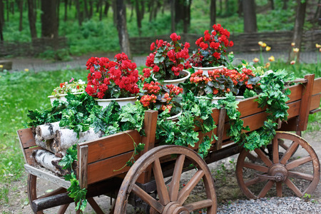 carreta madera: The cart with flowers. Scarlet red geranium flowerbed in retro styled old wooden wagon with birch firewood. Cranesbill in park landscape design, modern landscaping