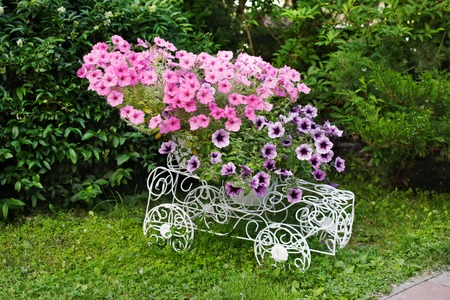 ironwork: Flowerbed from forged openwork white metal with bright pink flowers. Decorative ironwork car with petunias. Modern garden decoration.
