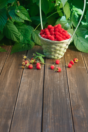 stay in green: Basket full of raspberries stay on wooden table outdoors at raspberry bush with green leaves background. Summer harvest of berries. Vertical image with copy space at brown wood Stock Photo
