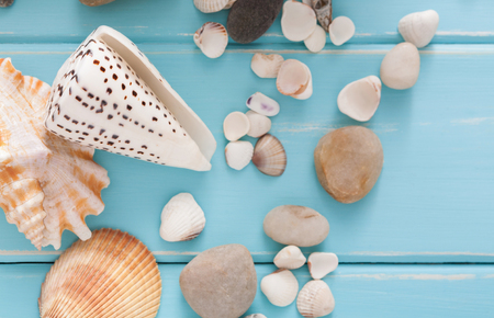 helm: Seashells on blue wood, sea vacation background with copy space on wooden planks, top view