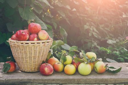 Cesta con manzanas. Reunión estacional de frutas, cosecha de otoño en concepto de jardín, agricultura y agricultura