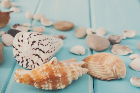 Seashells on blue wood, sea vacation background space on wooden planks Stok Fotoğraf