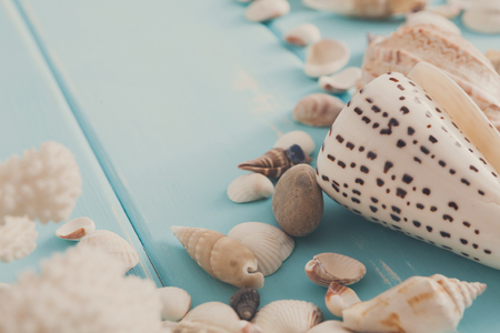 Seashells on blue wood, sea vacation background with copy space on wooden planks Stok Fotoğraf