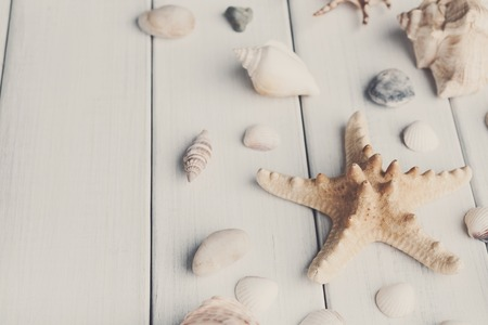 Seashells flat lay on white wood, sea vacation background on wooden planks Stok Fotoğraf