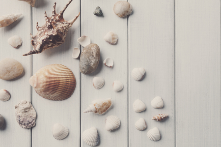 Seashells flat lay, top view on white wood, sea vacation background on wooden planks, copy space Stok Fotoğraf