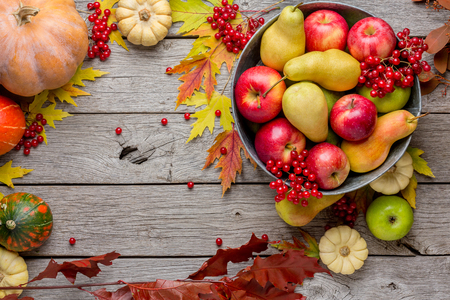 eberesche: Autumn harvest and thanksgiving card background. Various fruits, rowan, apples, pears in old metal basin and fall leaves on weathered rustic wood with copy space, top view Lizenzfreie Bilder