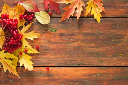 Autumn rowan leaves and viburnum frame on rustic wood background with copy space. Beautiful fall yellow foliage border. Seasonal harvest concept, top view