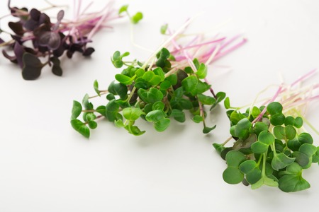 Micro greens variety isolated on white background, copy space. Assortment of baby, mockup for healthy eating and organic restaurant cooking advertisement Stockfoto