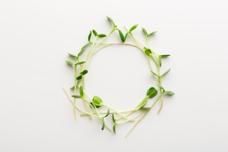 Tender arugula micro greens wreath isolated on white background. Eating right concept. Fresh garden produce organically grown as a symbol of health and vitamins from nature, top view, copy space