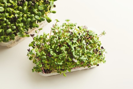 Growing micro greens isolated on white background. Healthy eating, fresh organic produce and restaurant serving concept. Sunflower and cress baby sprouts in plastic bowls, copy space