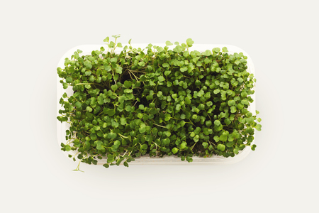 Growing micro greens isolated on white background. Healthy eating, fresh organic produce and restaurant decoration concept. Top view on redish in plastic bowl, copy space