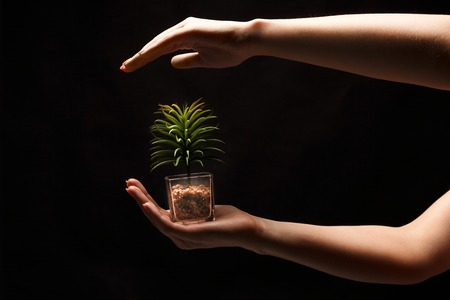 Female hands holding young green plant on black isolated background. Nature, growth and care concept, copy space, cutout Stock Photo