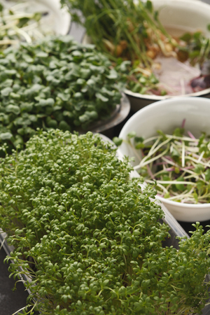 Assortment of micro greens at black background, copy space. Kale, alfalfa, sunflower, arugula, mustard, peas sprouts in bowls. Healthy lifestyle, stay young and modern restaurant cuisine concept Stock Photo