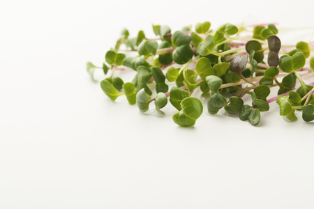 Micro greens isolated on white background, copy space, top view. Assortment of mustard baby sprouts, mockup for healthy eating and organic restaurant cooking advertisement
