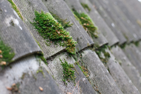 Texture of gray fiber asbestos roof sheets with green moss, closeup. Pattern of weathered old roof, rustic background