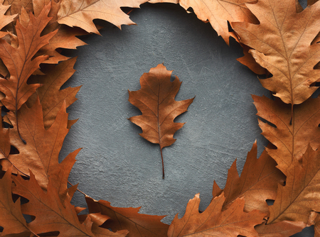 Autumn season background, brown oak leaves on grey stone background with copy space.