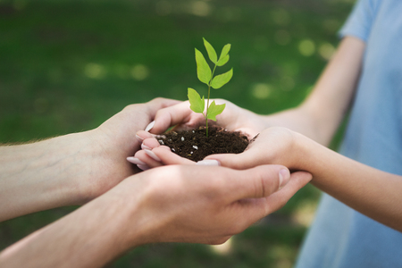 Two farmer hands holding and caring young green plant. Heal earth day and save the world concept background, copy space