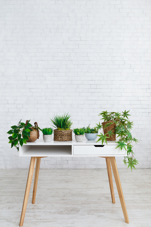 Various houseplants in pots on table against white brick wall, empty space Stok Fotoğraf
