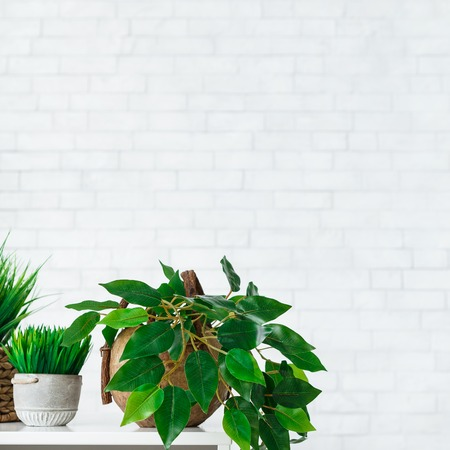 Indoor green plants in pots on table at white brick wall background. White and green concept
