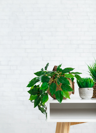Indoor green plants in pots on table at white brick wall background. Eco green decor concept